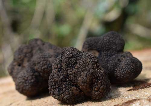 Tuscany Culinary Adventure - truffles